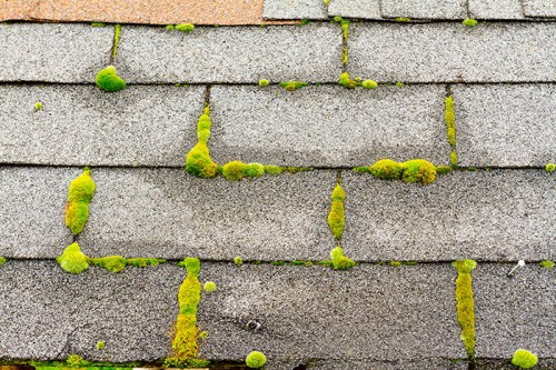 Green Roofing Options for Toronto Homeowners